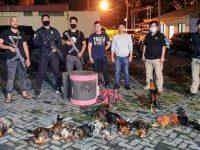 Gerebek Judi Sabung Ayam di Tiga Lokasi, Polisi Amankan 24 Tersangka, 21 Ekor Ayam dan Uang